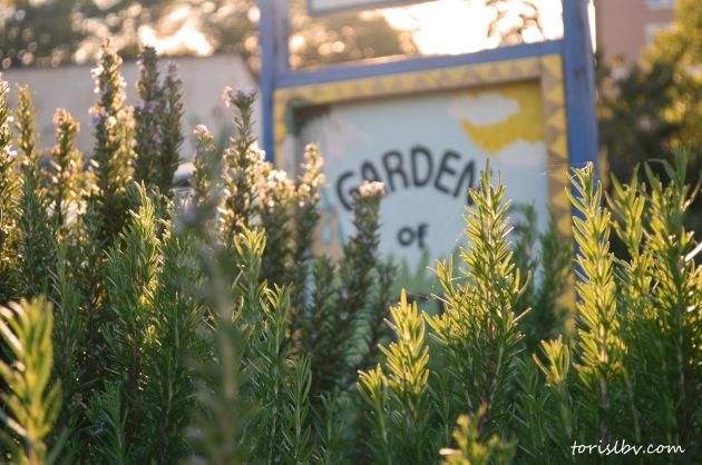 garden of eden_lbvcom