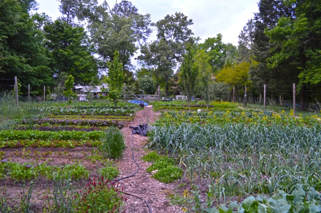 Homegrown City Farm