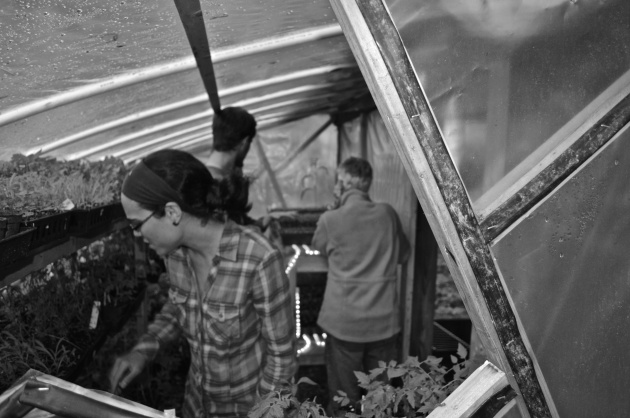 Homegrown Greenhouse