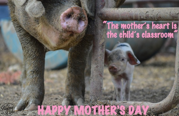 MothersDayPigs1